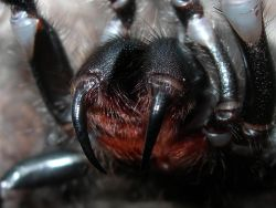 SpiderModelingReference_09