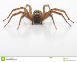 SpiderModelingReference_02