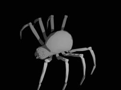 SpiderModelingReference_15