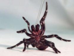 SpiderModelingReference_17